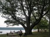 TAC lake service picture