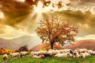 shepherds-12-25-2016