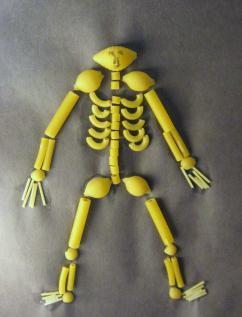 7-30-2017 Skeleton of Pasta